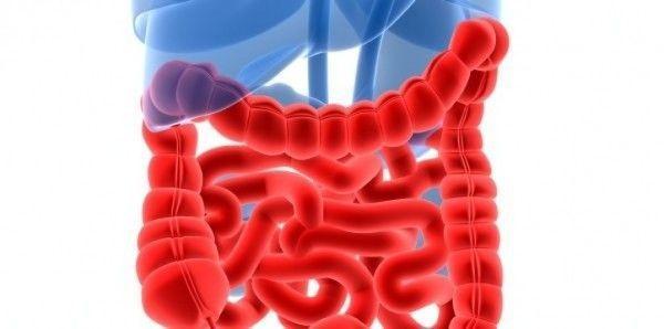 Pautas nutricionales para Colitis Ulcerosa y Enfermedad de Chron, cómo puedes mejorar tu calidad de vida